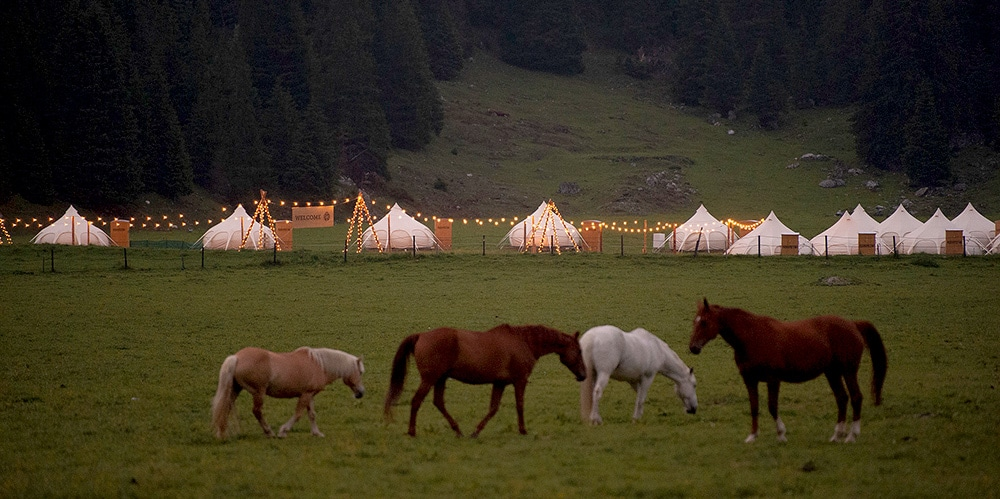 Glamping epitomises the reconnection of tourism with nature, wildlife adventure and tourist participation within nature based tourism. Novel experiences, a sense of exploration appeal to venturesome travellers